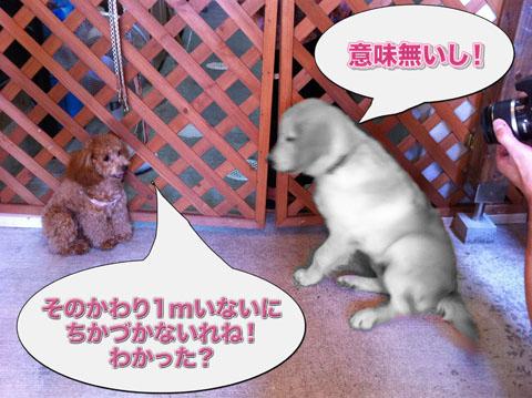 13_20110920120048.jpg