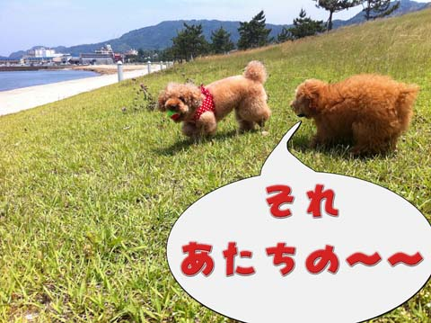 15_20110603232953.jpg