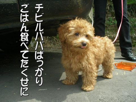 16_20110510173318.jpg