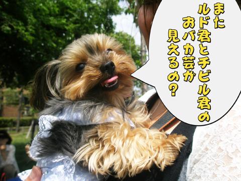 16_20110523223123.jpg