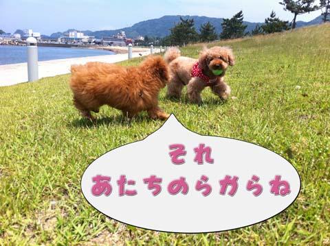 16_20110603232952.jpg