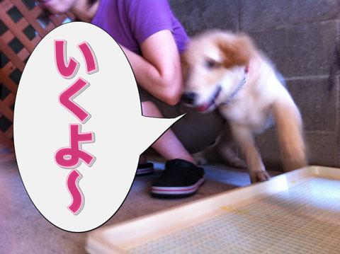 16_20110920120047.jpg
