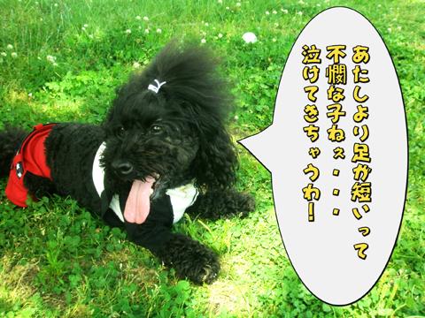 18_20110523223122.jpg