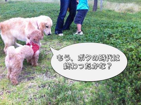 20_20111003004341.jpg