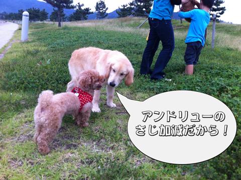 22_20111003004340.jpg