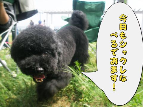 25_20110524091704.jpg