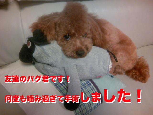 27_20110901010238.jpg