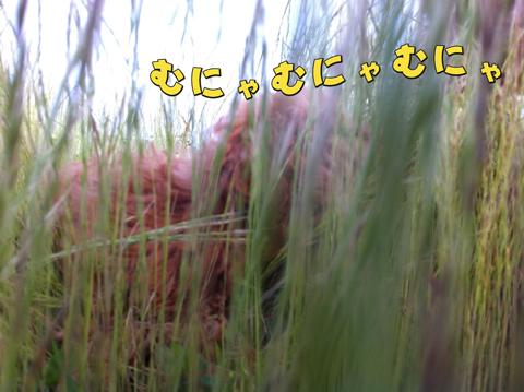 IMG_8656_20110618190530.jpg