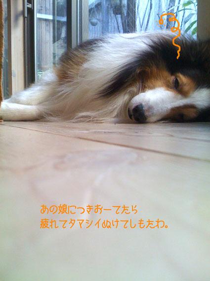 00_20110217194343.jpg