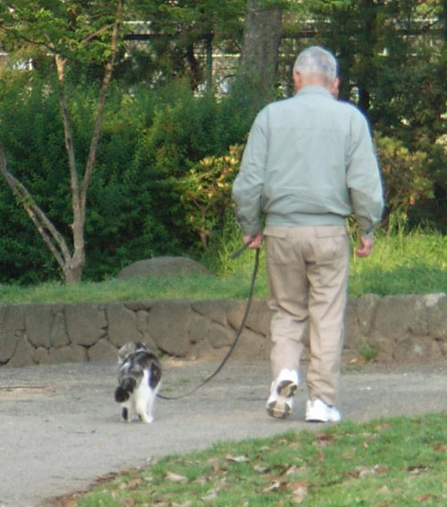散歩するネコ