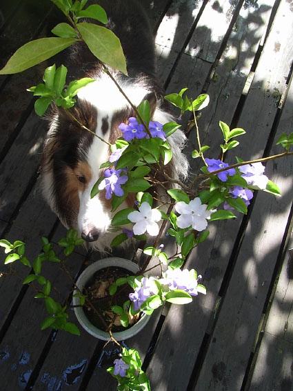 エランと花
