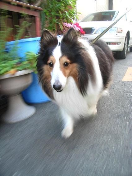 散歩行くぜ!