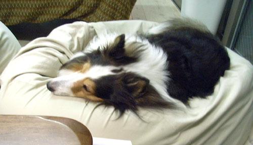 ELAN寝てる