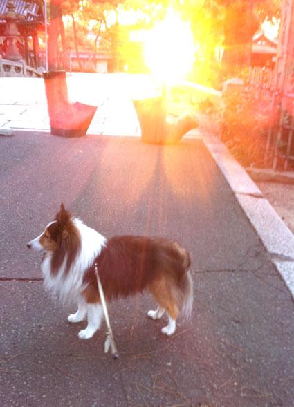 1朝日の犬