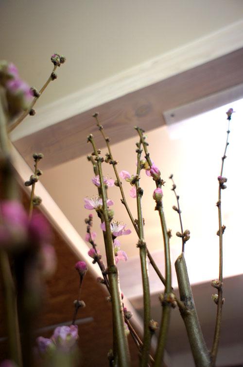 000桃の花