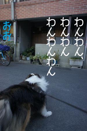 004ほえる