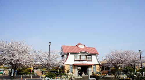 00田園調布桜