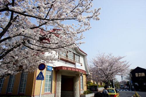 03田園調布の桜の木
