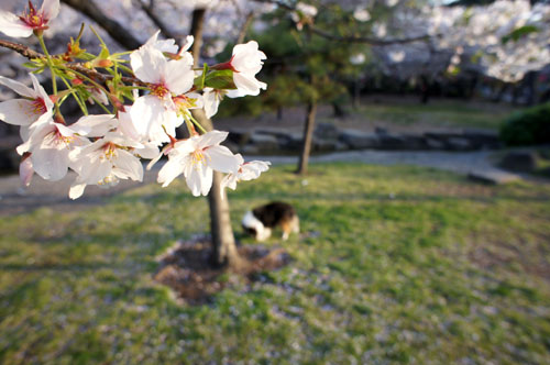 a101桜21