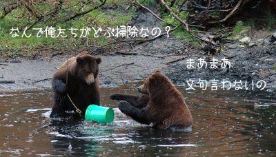 クマの掃除