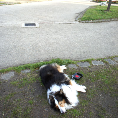 公園でのリラックス