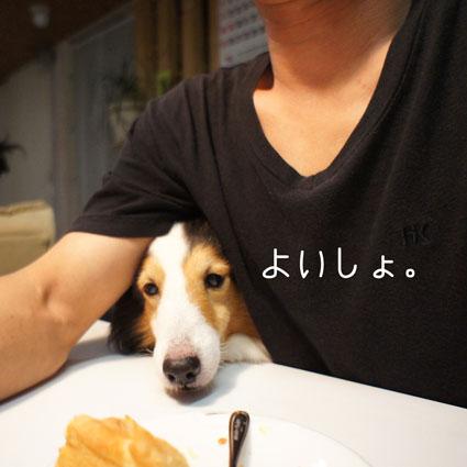 YOISYO