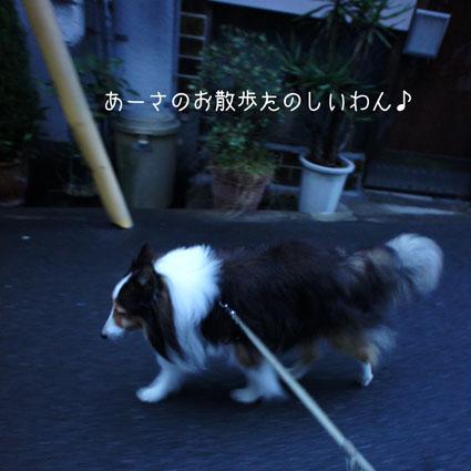ASA_20111015193856.jpg
