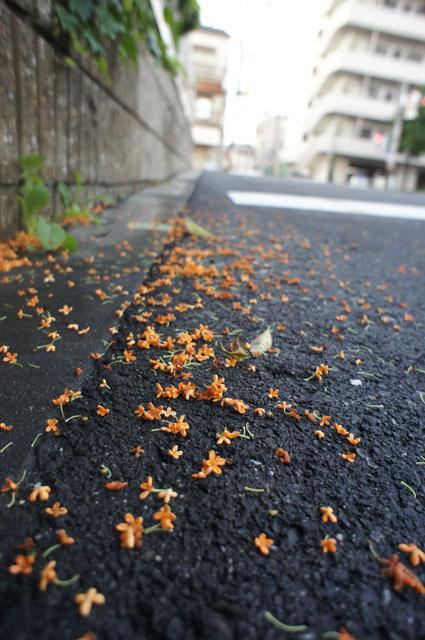 KINMOKU_20111026121346.jpg