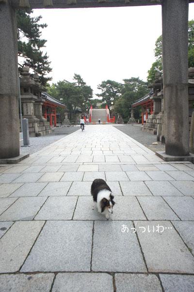 attuiwa_20110725071203.jpg