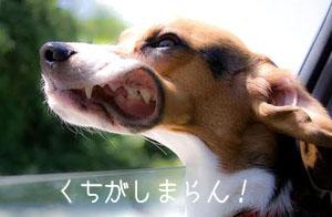 d1_20110601213840.jpg
