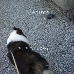 kame3_20110710081414.jpg