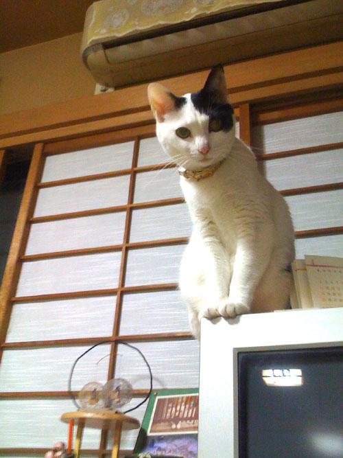 miki_20101120110523.jpg