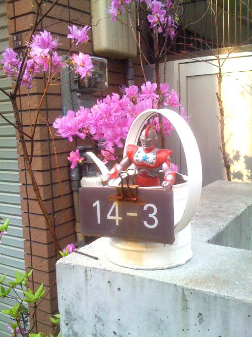 miyama_20110415123730.jpg
