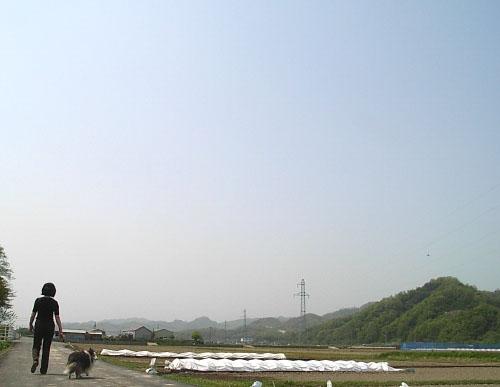 naeda2.jpg