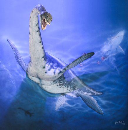 南極で最古の首長竜、化石発見