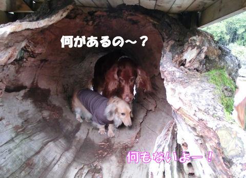 CIMG4615-12.jpg