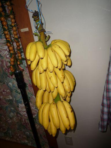 バナナ_512