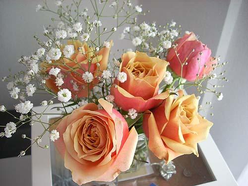 20091222薔薇①