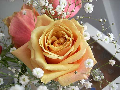 20091222薔薇③