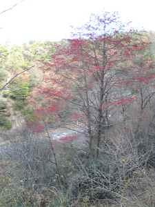 tamamizuki087.jpg