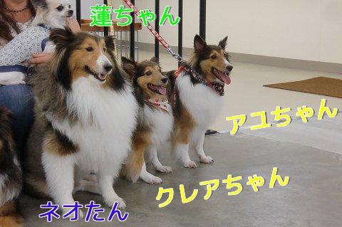 蓮ちゃん、ネオたん、クレア&アユちゃん