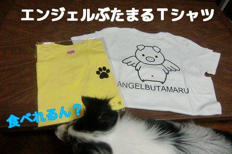 エンジェルぶたまるTシャツ(黄・白)