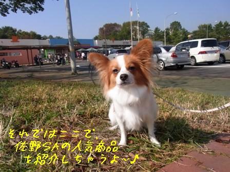 レジーナ1日目人気商品紹介