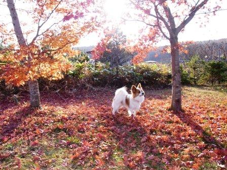 レジーナ1日目紅葉の絨毯で