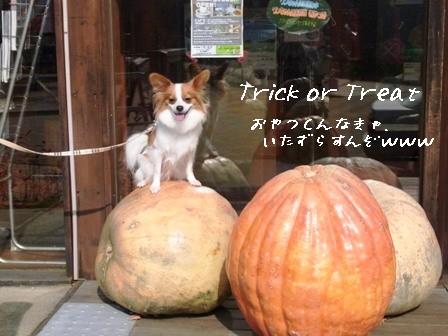 レジーナ1日目かぼちゃの上で