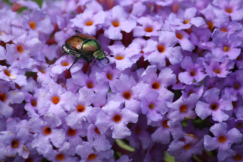 紫の絨毯で