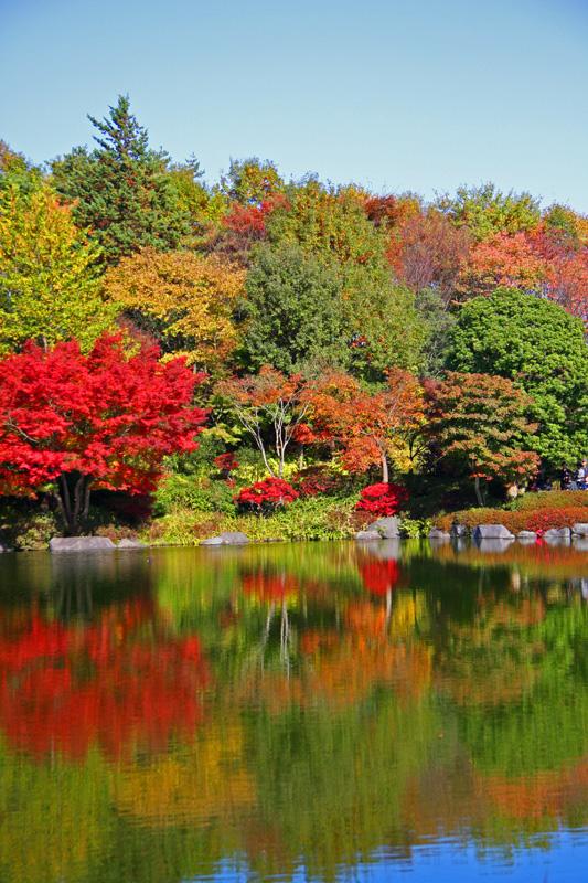 紅葉のある水辺の風景