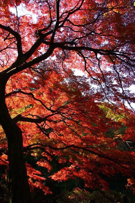 まっかな秋