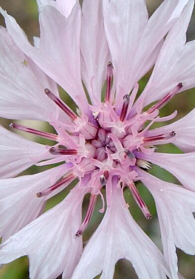 2010庭の花02