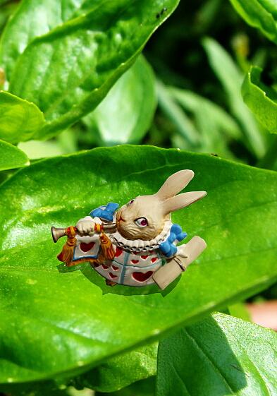 ウサギ見つけた